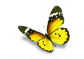 Sticker papillon jaune