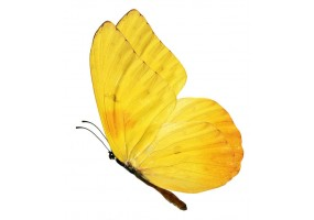 Sticker papillon jaune