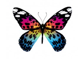 Sticker papillon multicolore