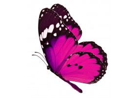 Sticker papillon rose
