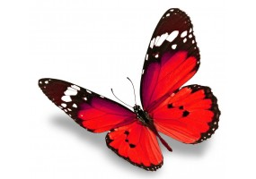 Sticker papillon rouge