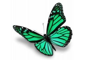 Sticker papillon vert