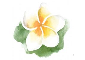 Sticker fleur de tiaré
