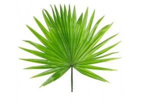 Sticker feuille de palmier