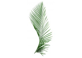 Sticker feuille palmier