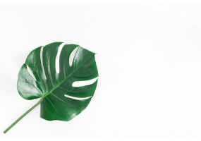 Sticker feuille tropicale