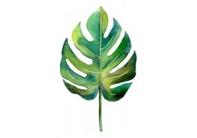 Sticker feuille palmier aquarelle