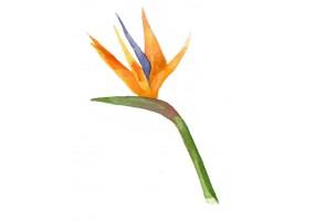 Sticker fleur tropicale