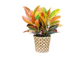 Sticker plante multicolore