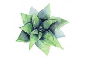 Sticker plante pastel