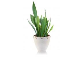 Sticker plante verte