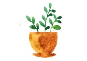 Sticker plante verte aquarelle
