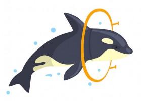 Sticker orque cerceau