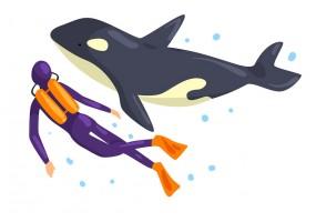 Sticker orque nageur