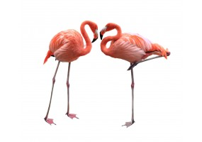 Sticker flamant rose duo