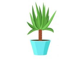 Sticker fleur yucca