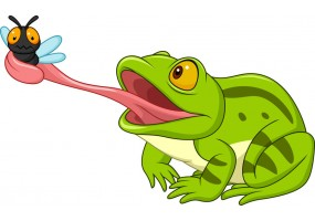 Sticker grenouille mouche