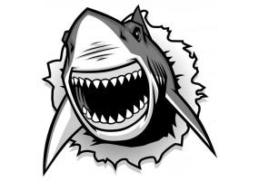 Sticker cartoon requin