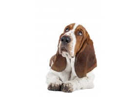 Sticker Chien basset allongé