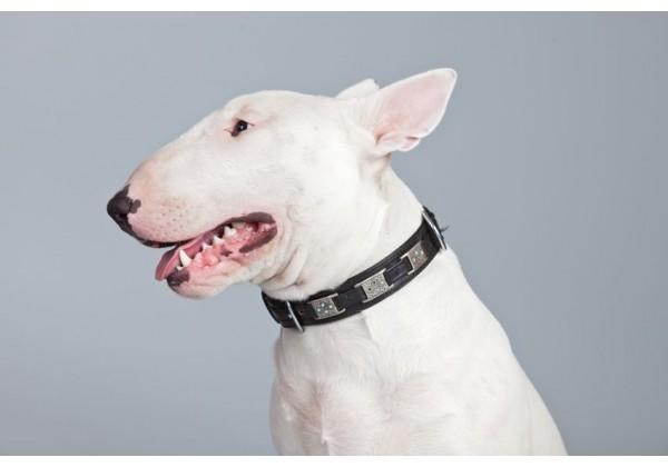 Sticker chien bull terrier