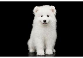 Sticker chien esquimau