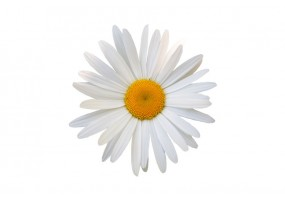 Sticker Marguerite