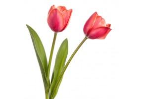Sticker Tulipe