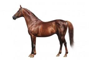 Sticker cheval