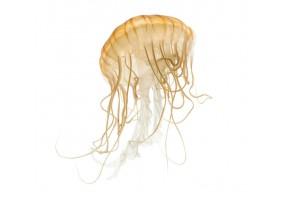Sticker méduse