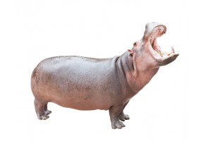 Sticker HIPPOPOTAME