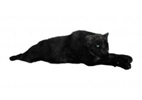 Sticker Panthère noire