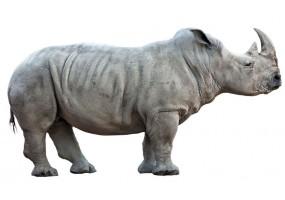 Sticker Rhinocéros
