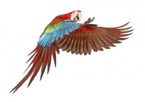 Sticker Perroquet Ara