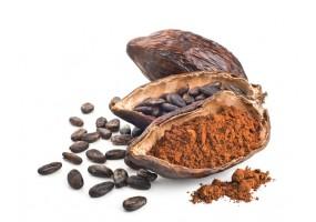 Sticker Fève de cacao