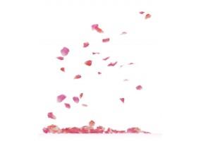 Sticker pétale de rose