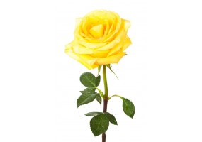 Sticker Rose Jaune
