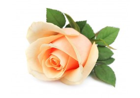 Sticker Rose Orange