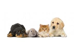 Sticker Chat chien