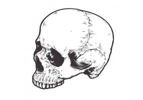 Sticker tete de mort crane