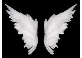 Sticker ange aile blanche
