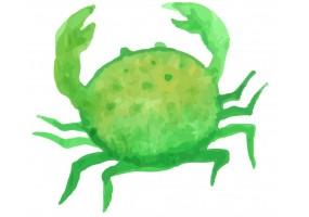 Sticker coquillage crabe vert