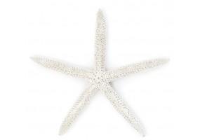 Sticker coquillage étoile de mer blanche