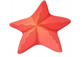 Sticker coquillage étoile de mer rouge